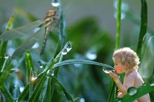 Baby Dew Faery